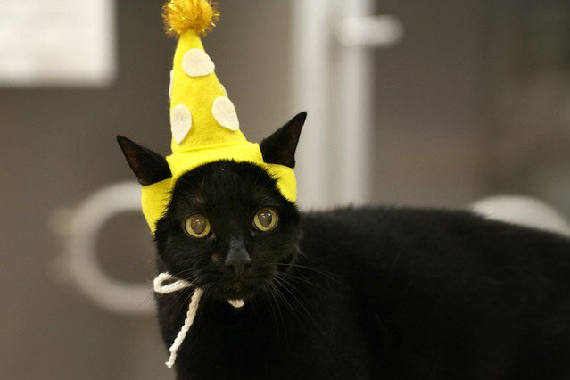 Black kitty with a yellow hat