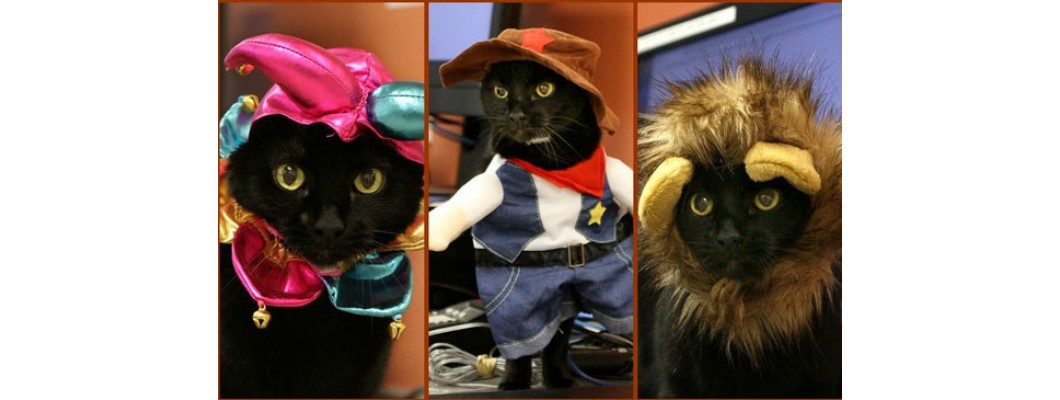 Pet safety on Halloween: Tips you can use